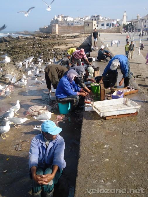 maroko3_23