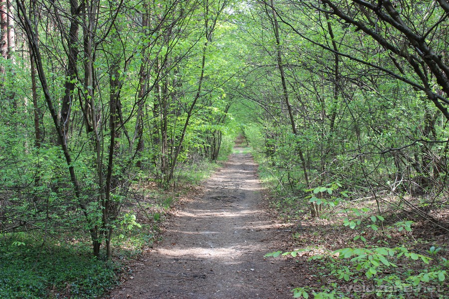 W lasach  Trzebiesławskich